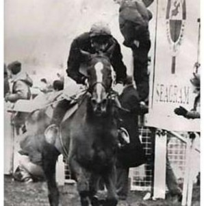 Maori Venture (1976 - 2000) the 1987 Grand National